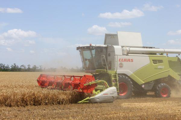 Зерно убирают с усть-лабинских полей